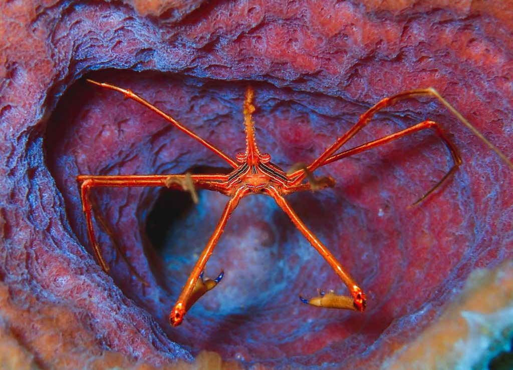 Camille Kaufman took first place with her colourful shot of an arrow crab tucked inside a purple vase sponge.