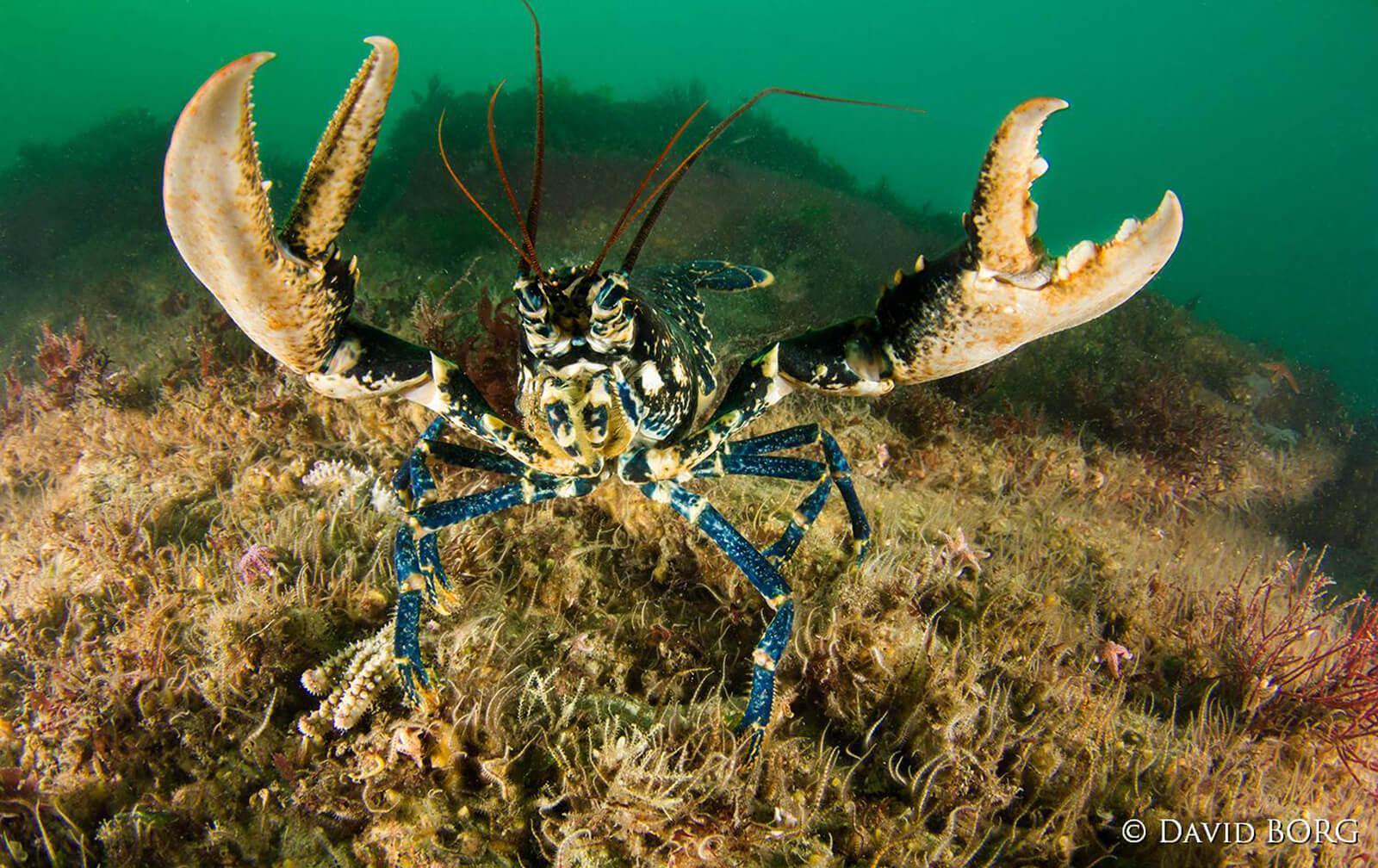Macro Photos by Marine Biologist, David Borg 4