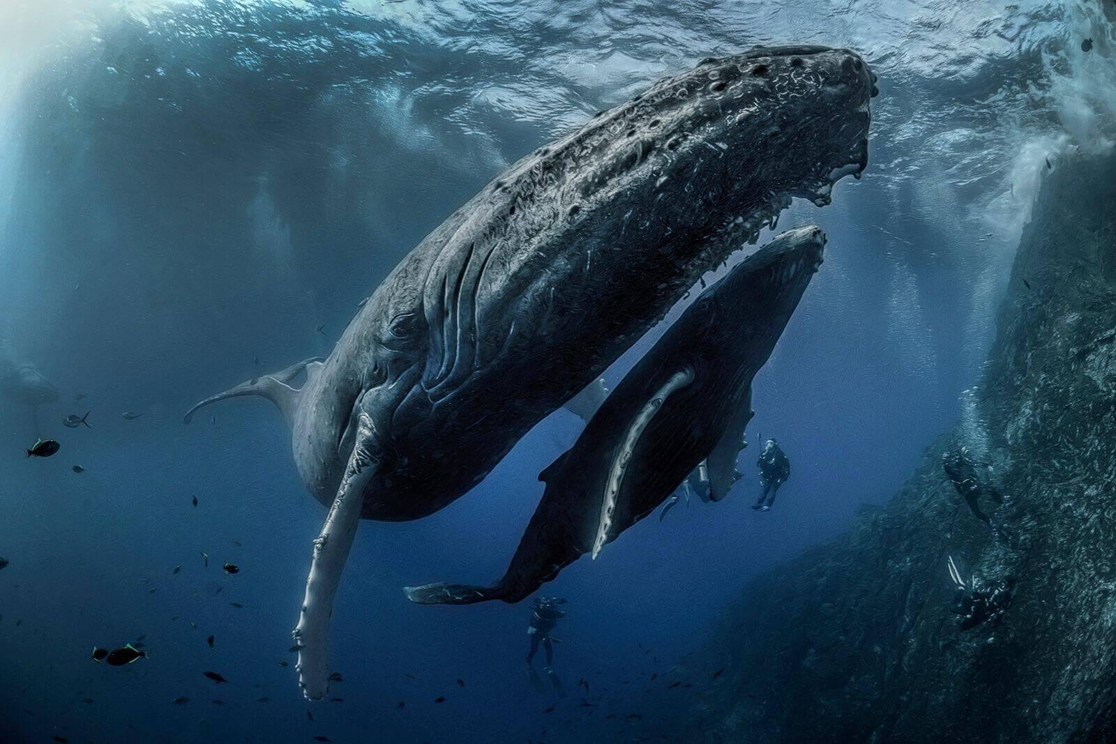 Humpback whale at Socorro islands