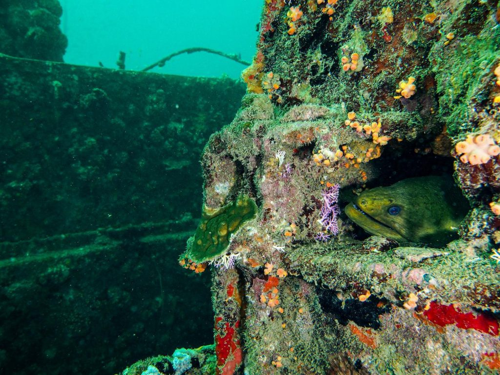 shot of a green moray nestled in the Veronica L wreck