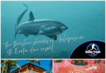 Scuba Travel, Philippines, Malapascua, Thresher sharks