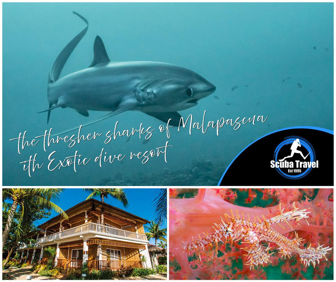 Scuba Travel, Philippines, Malapascua, Thresher sharks