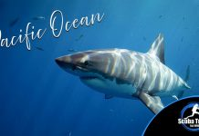 Scuba Travel, Pacific, Dive Show Deals
