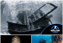 Scuba Travel, Dive Show Offers, Egypt, Liveaboards