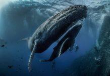 Rodney Bursiel Underwater Photographer