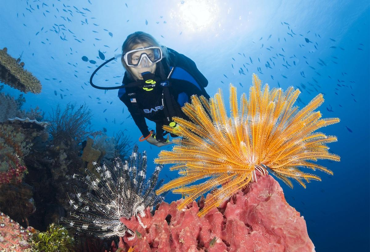 Wakatobi diver and coral reef