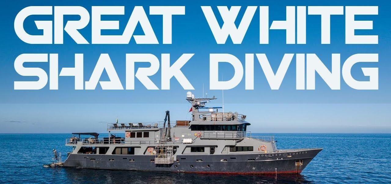 Socorro Vortex & Great White Sharks diving