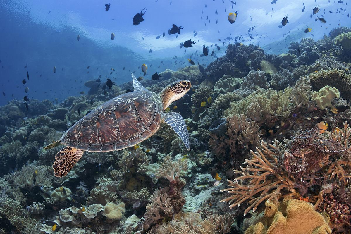 Turkey Beach dive site