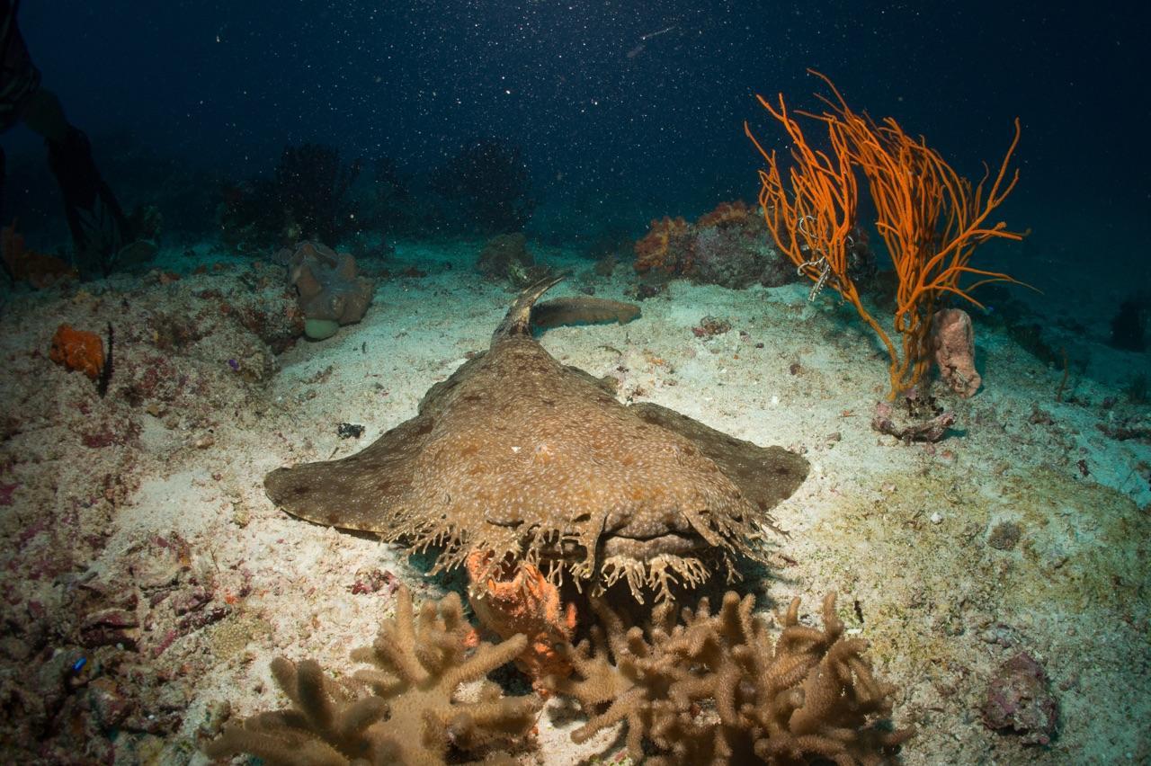 Best Raja Ampat Dive Sites