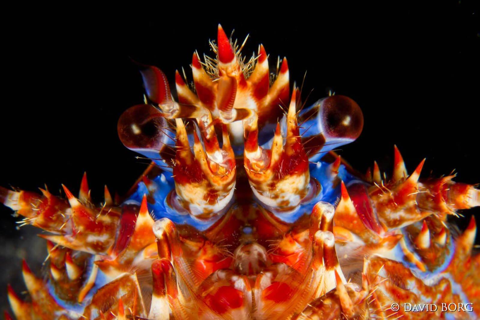 marine biologist 19