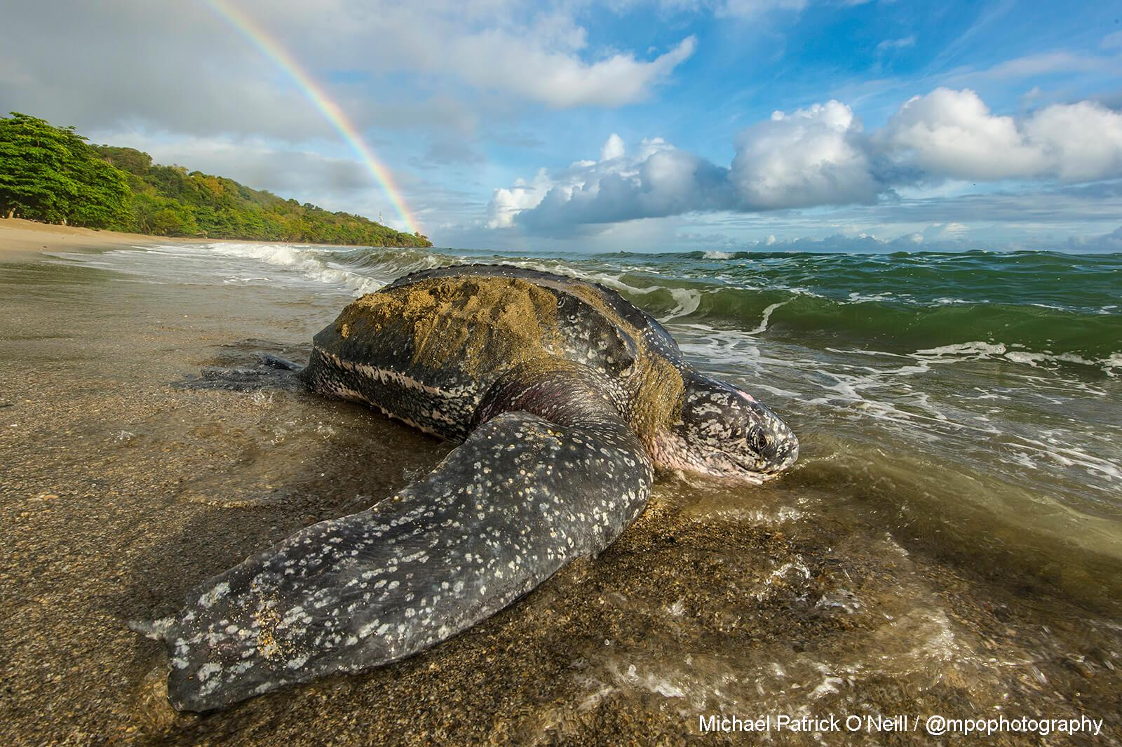 Turtle. Underwater Photography by Michael Patrick O'Neill