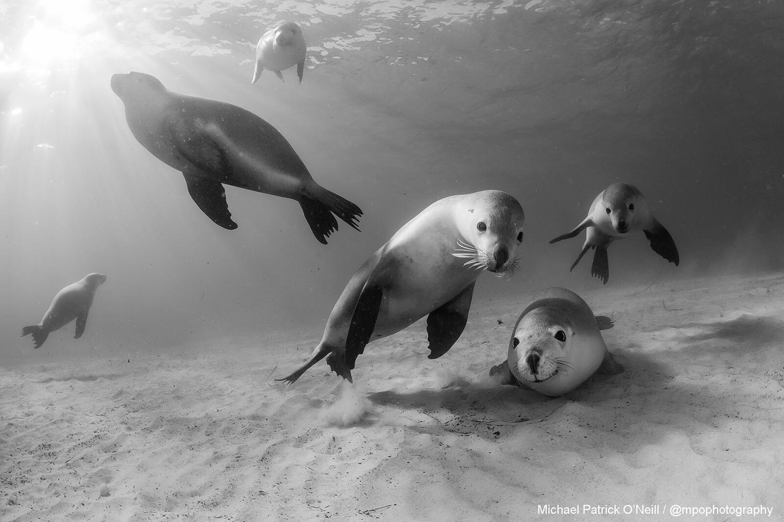 Underwater photography by Michael Patrick O'Neill