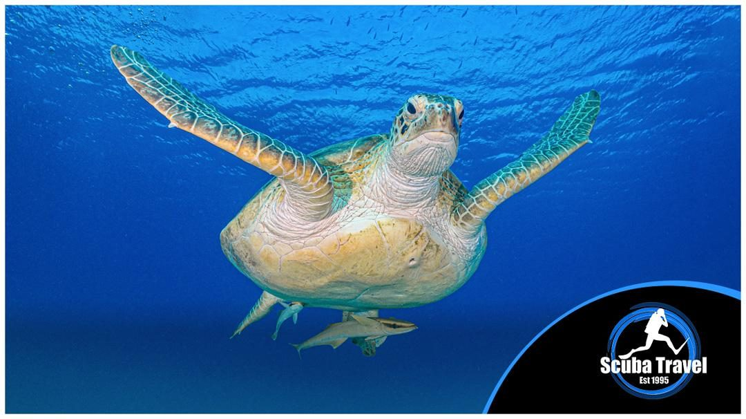 turtle-cover