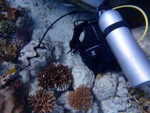 Coral Reef CPR 2