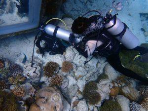 Coral Reef CPR 1