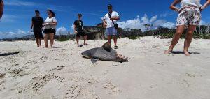 Half Eaten Shark 1