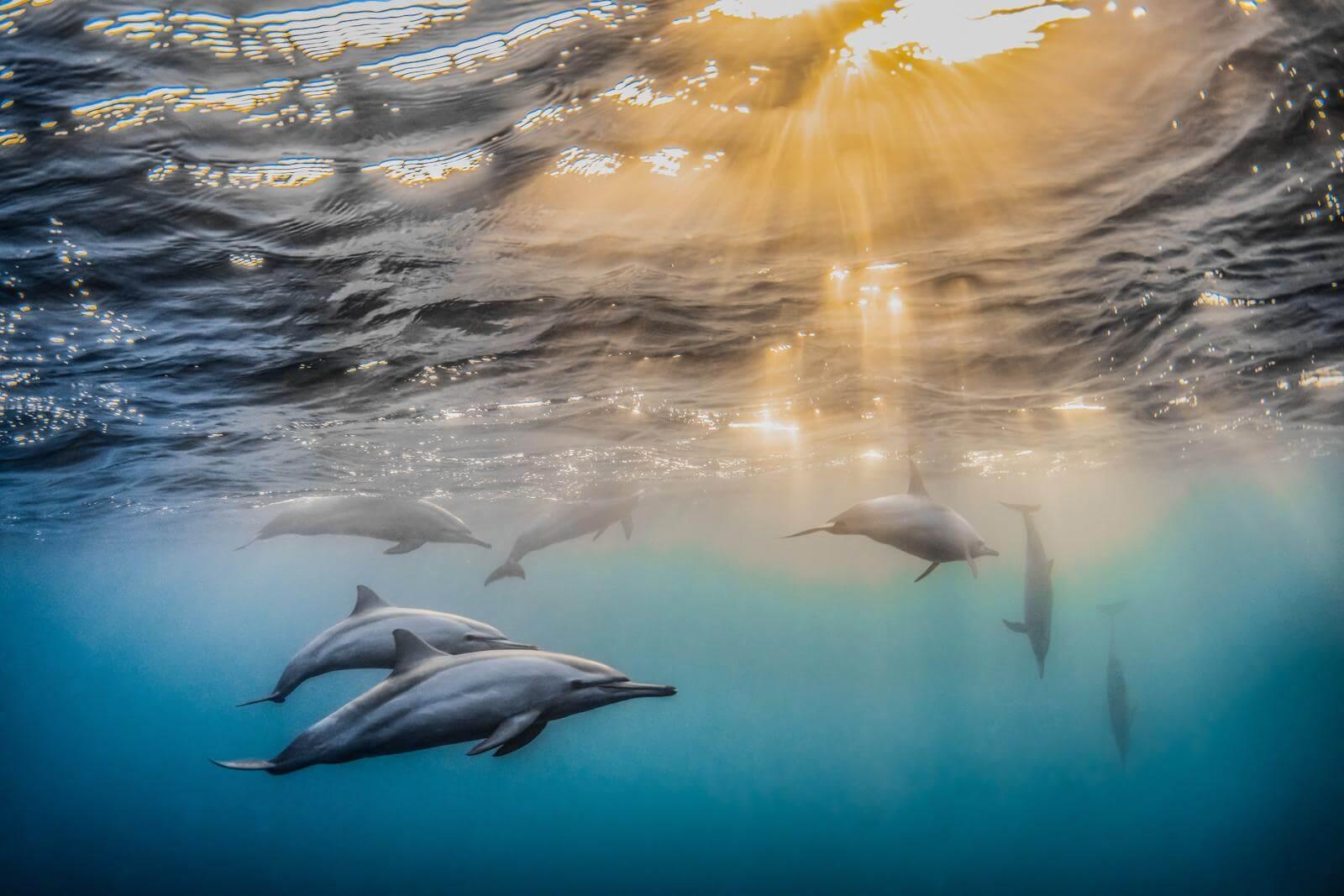 Dolphins by Rafael Fernández Caballero