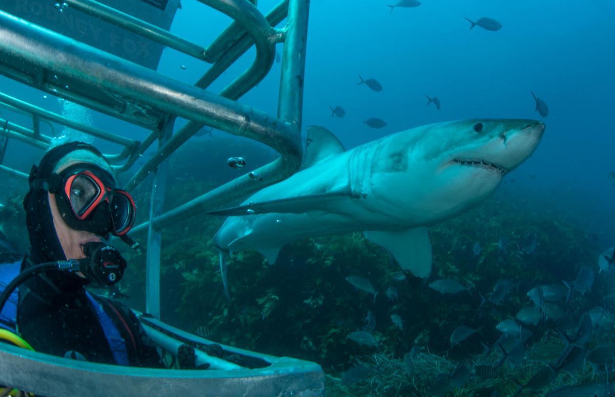 Ocean floor cage diving view