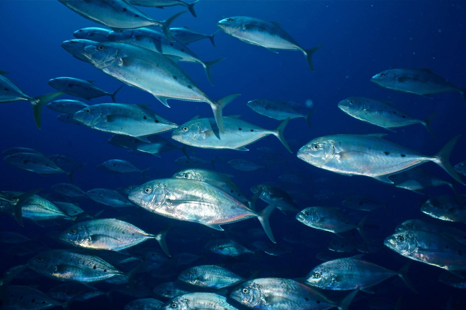 10 reasons to dive the Egyptian Red Sea (10)