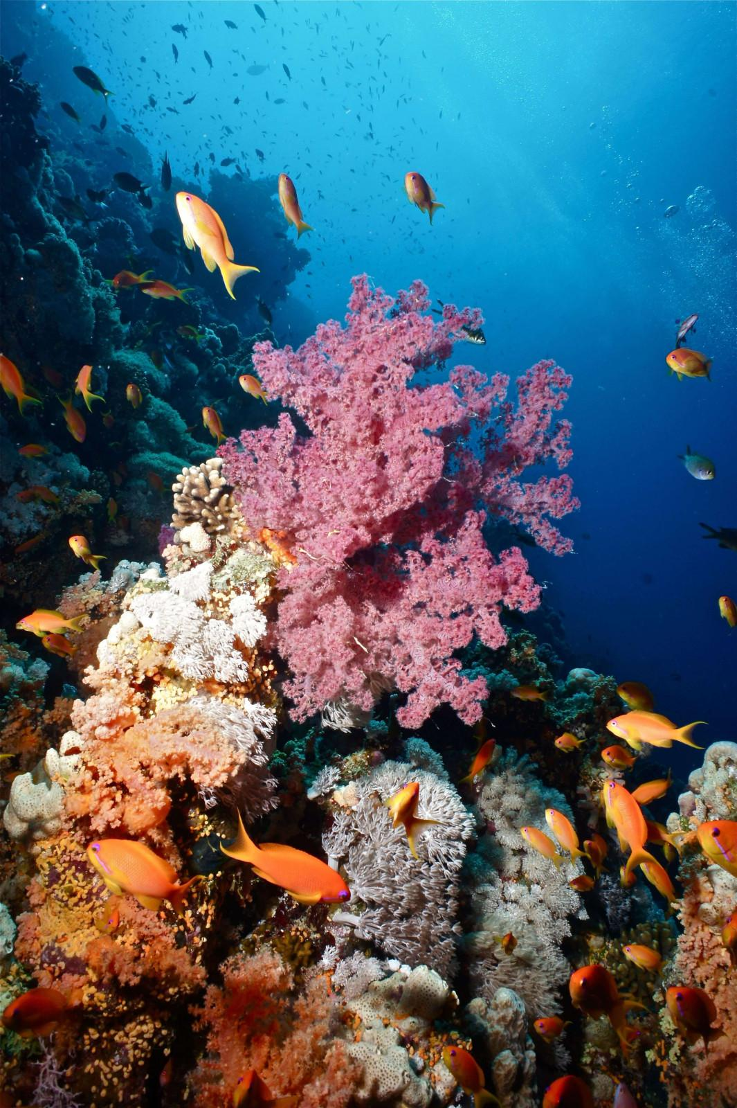 10 reasons to dive the Egyptian Red Sea (12)