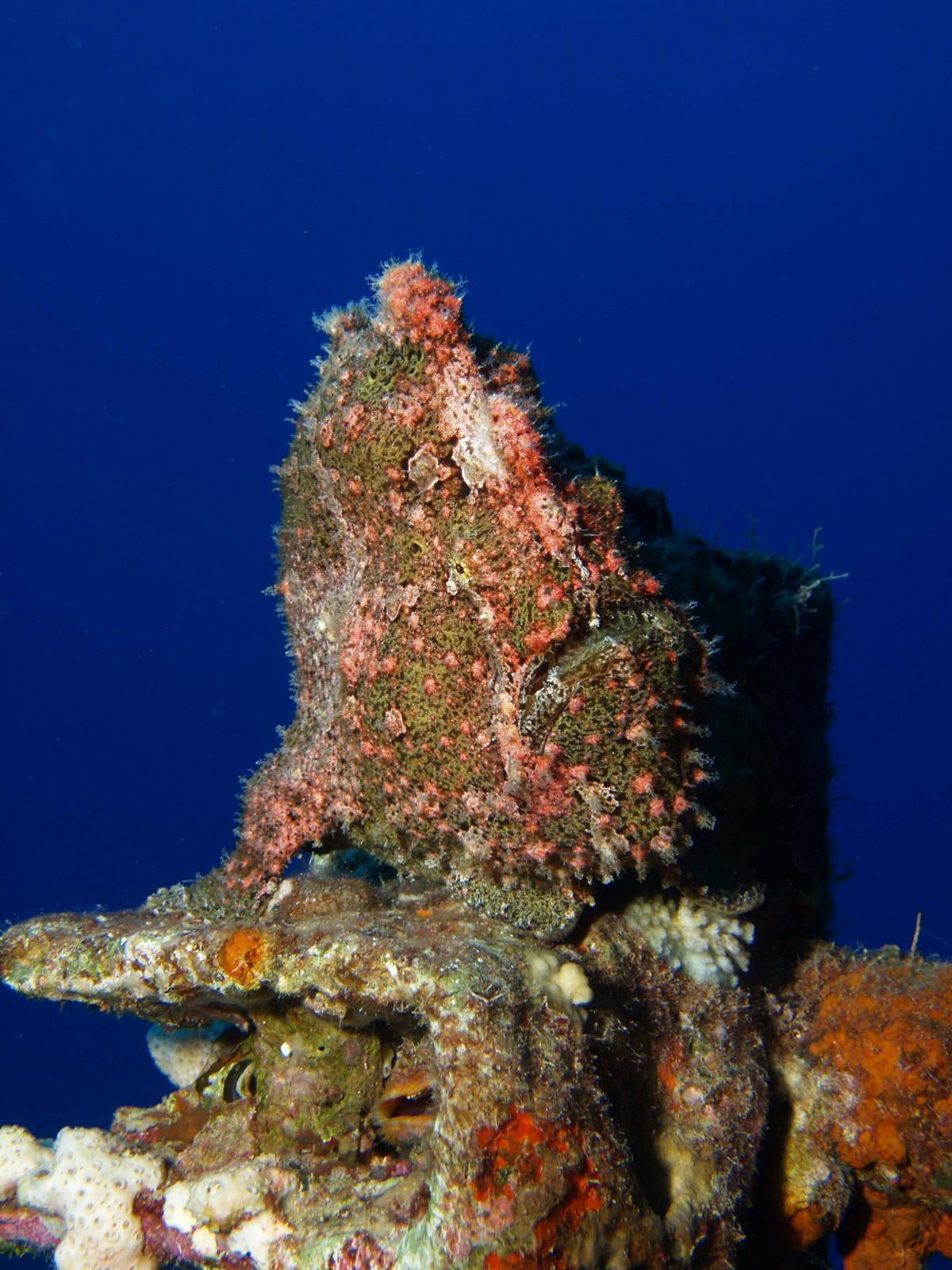 10 reasons to dive the Egyptian Red Sea (2)