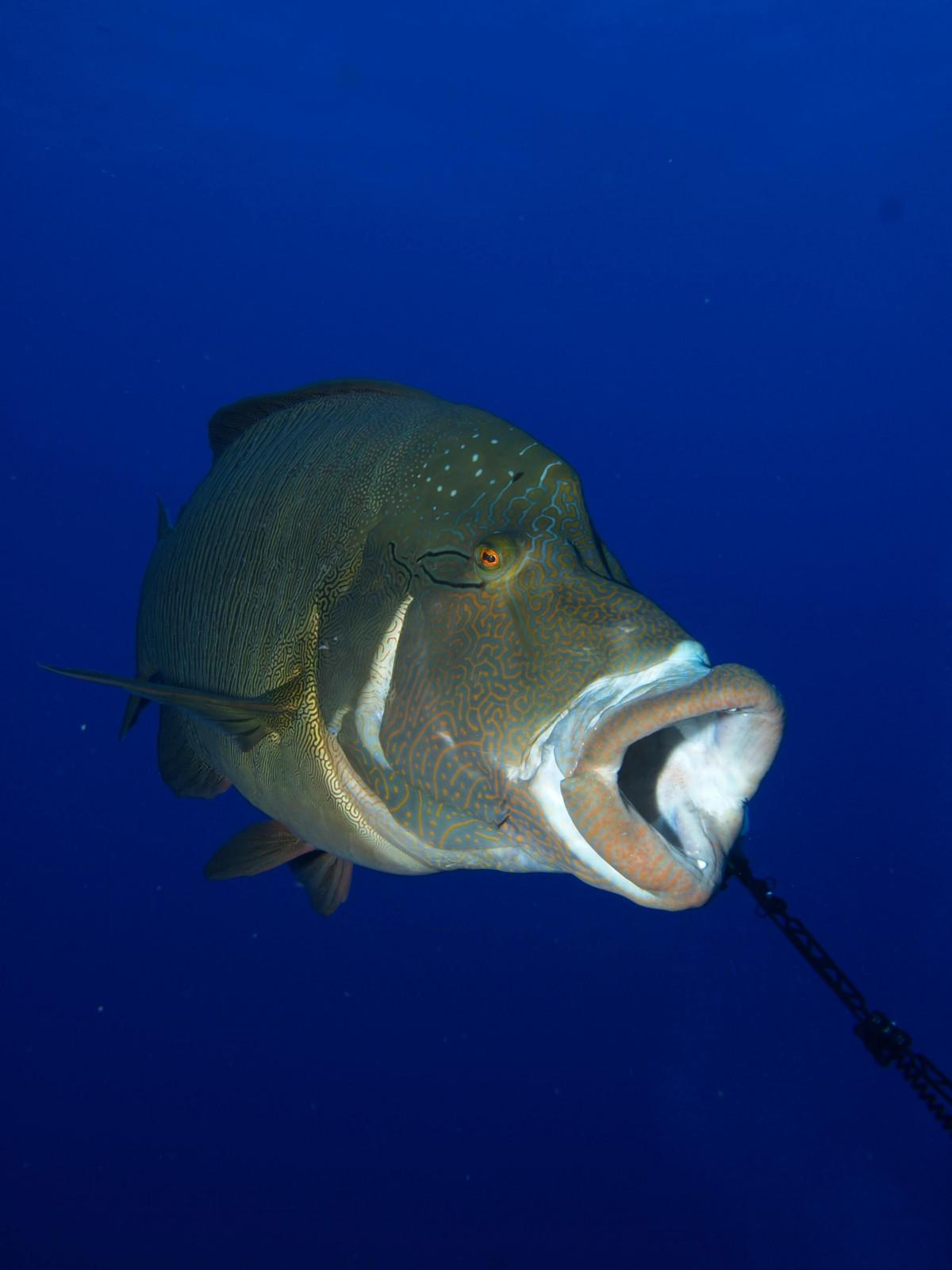 10 reasons to dive the Egyptian Red Sea (6)