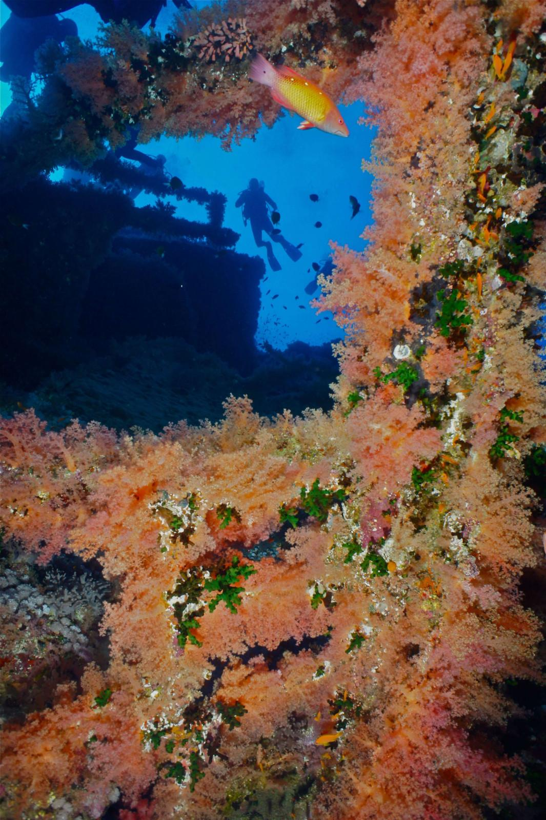 10 reasons to dive the Egyptian Red Sea (8)