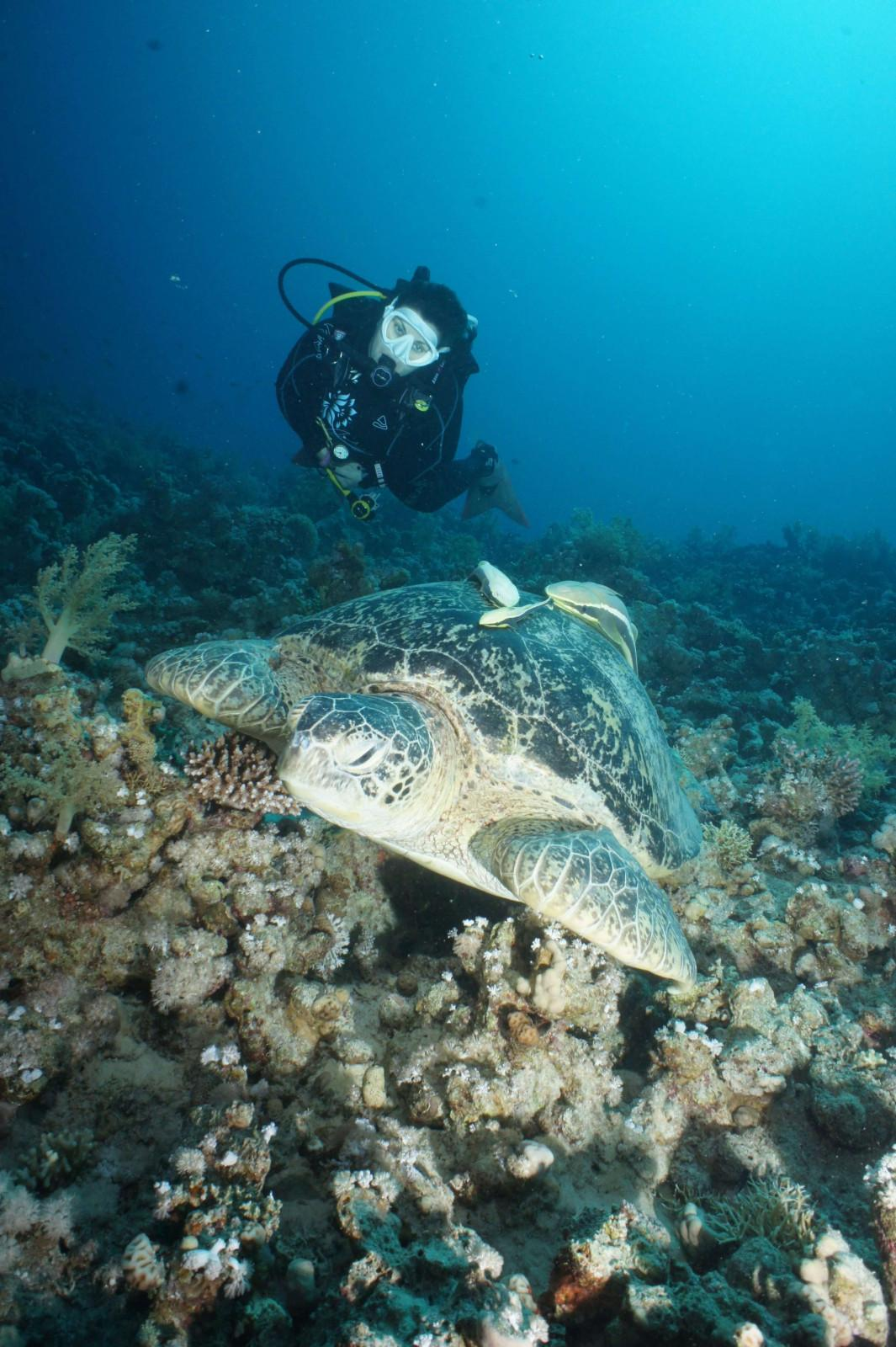 10 reasons to dive the Egyptian Red Sea (9)