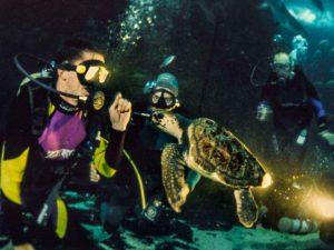 Juvenile Loggerhead Turtle in Two Oceans Aquarium