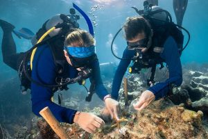 Divers involved with the Reef Restoration Project in the Florida Keys