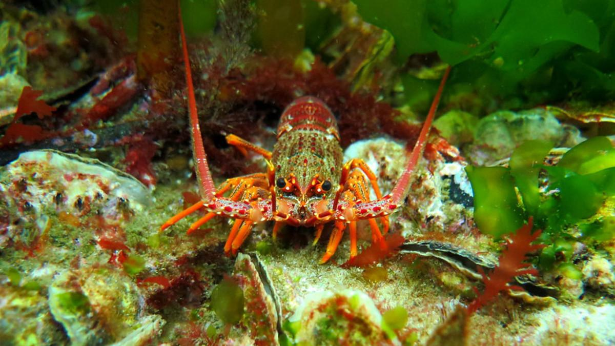 Proposed New Shellfish Reef for South Australia