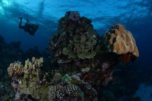 Osprey Reef, Hard Coral Formations at False Entrance