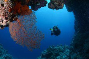 Sea fan & Diver, Osprey Reef, The Gap