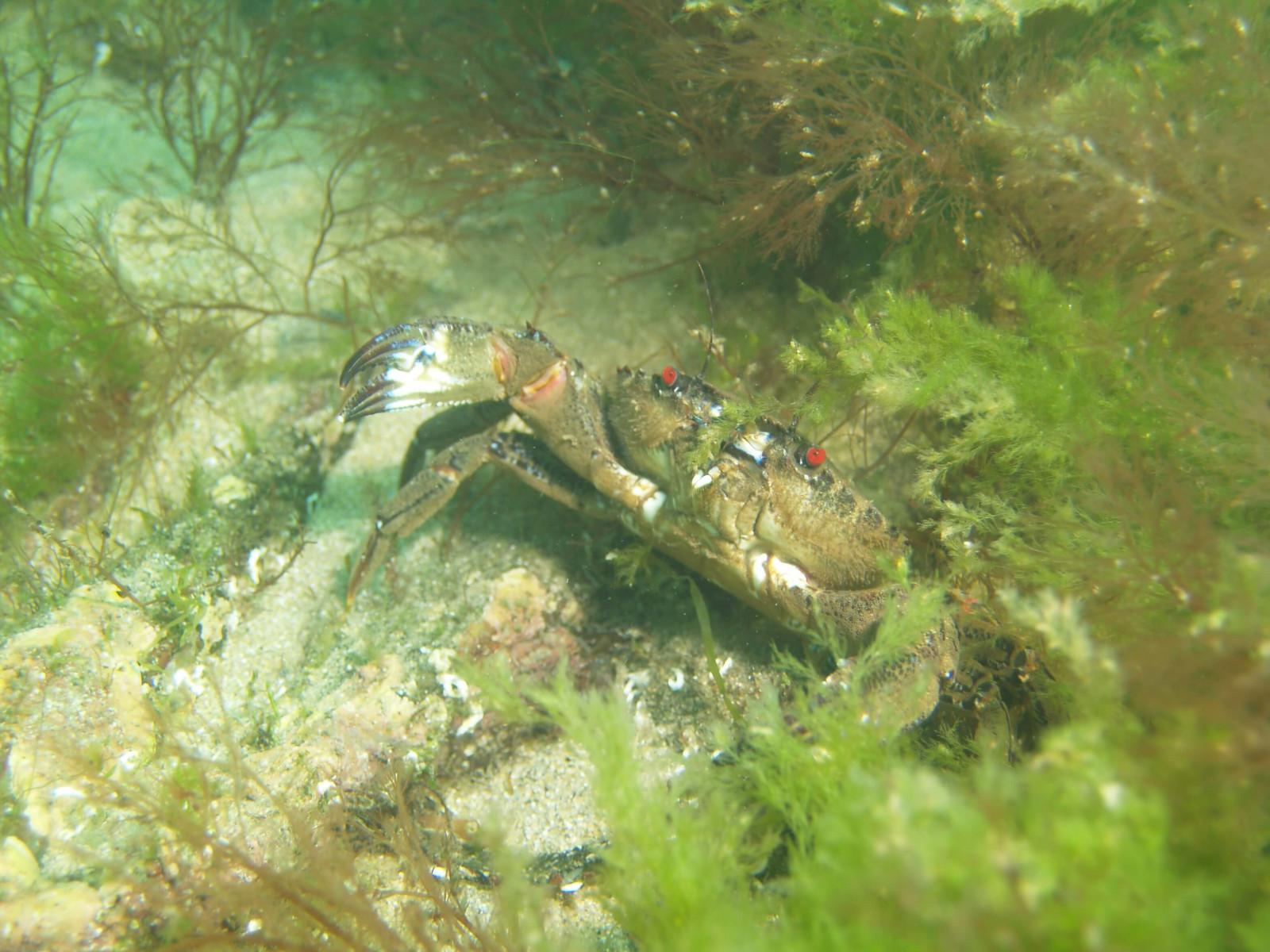 Images from Dive at Porth Dafarch, west coast of Anglesey in North Wales (1)