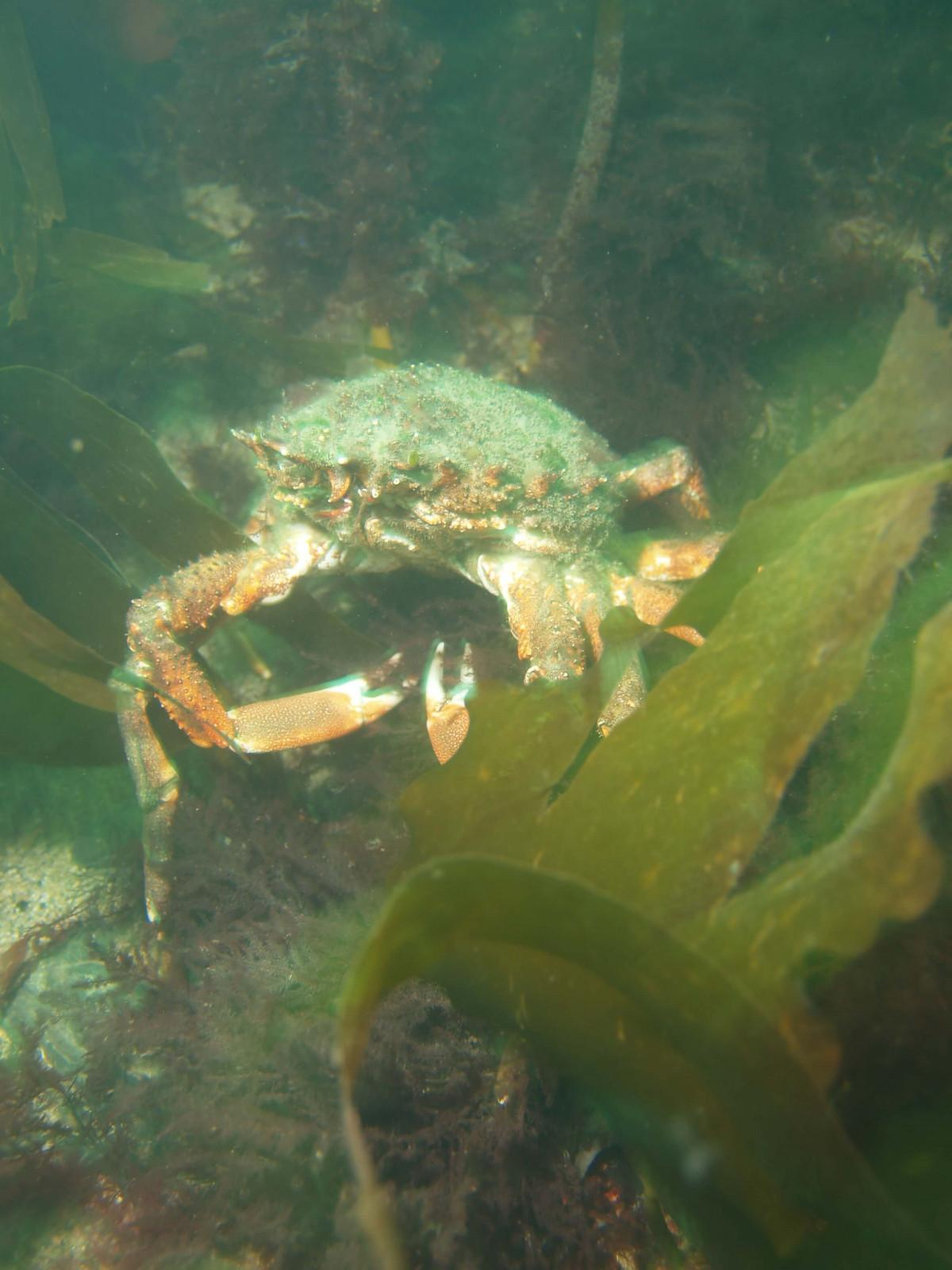 Images from Dive at Porth Dafarch, west coast of Anglesey in North Wales (3)