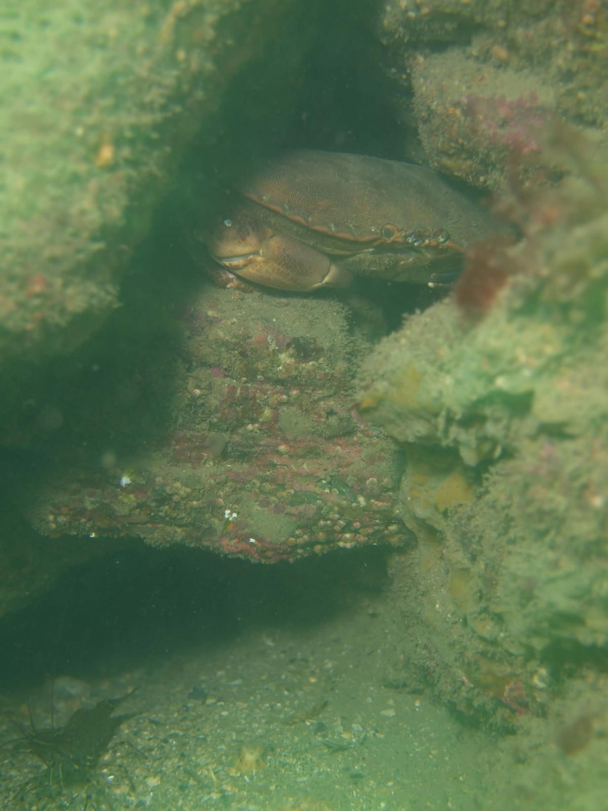 Images from Dive at Porth Dafarch, west coast of Anglesey in North Wales (4)