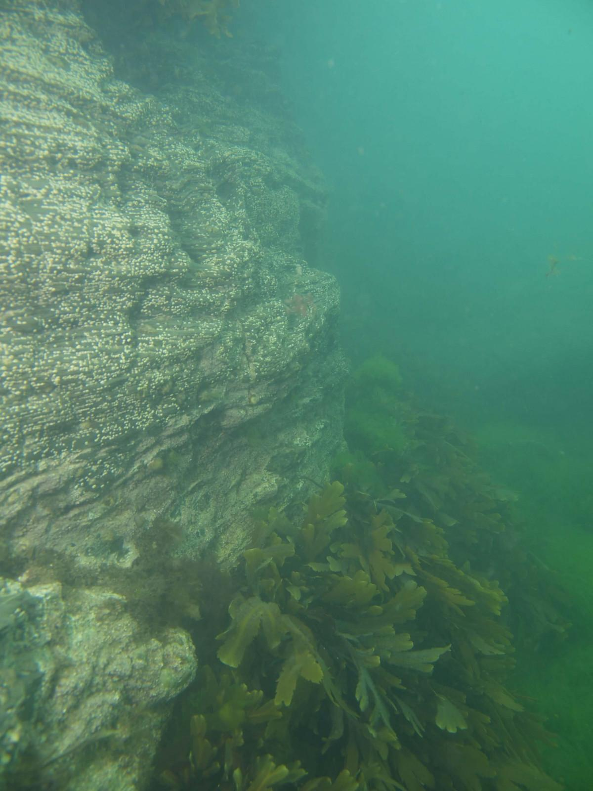 Images from Dive at Porth Dafarch, west coast of Anglesey in North Wales (5)