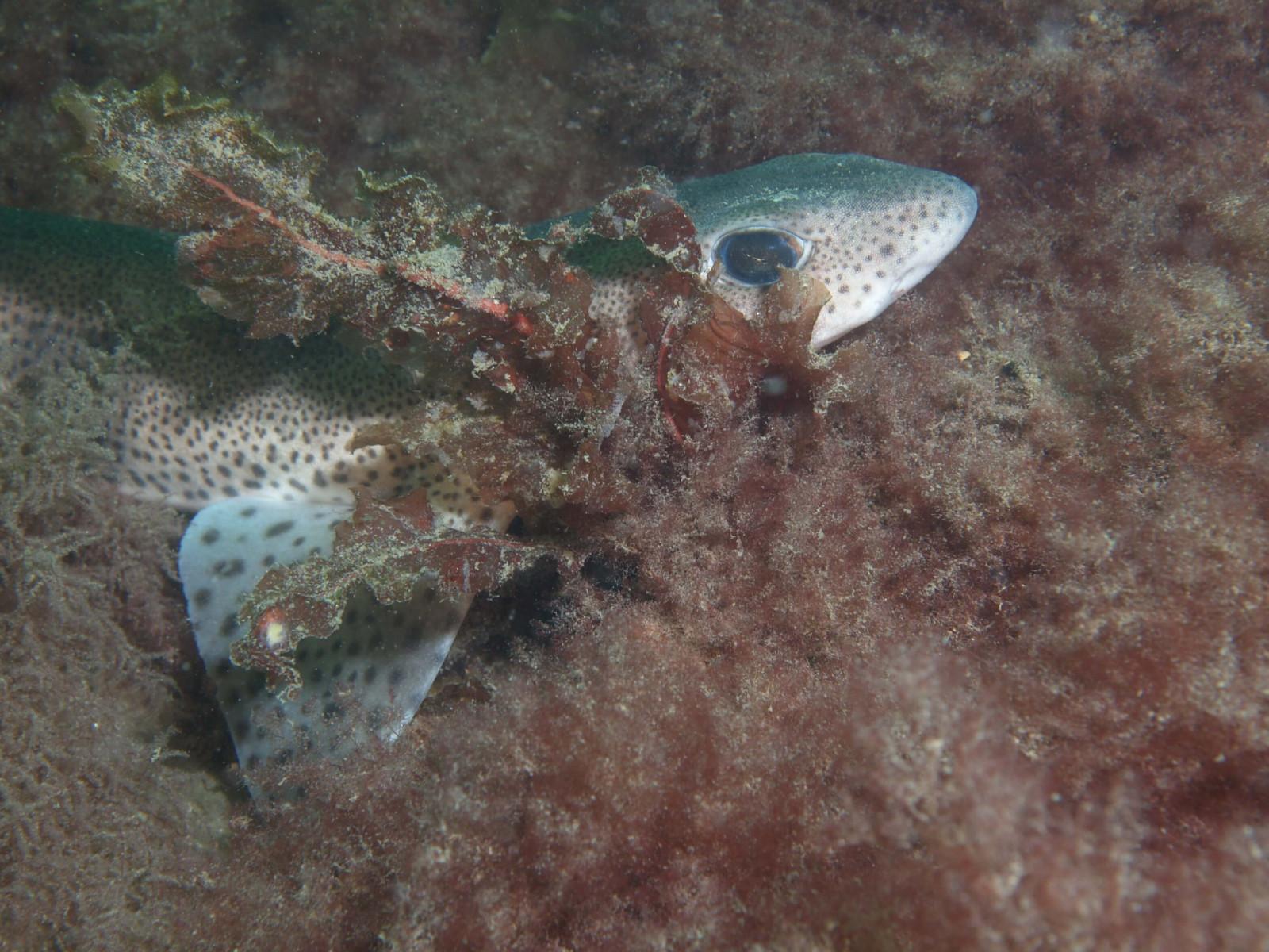 Scuba Dive at Drawna Rocks (11)
