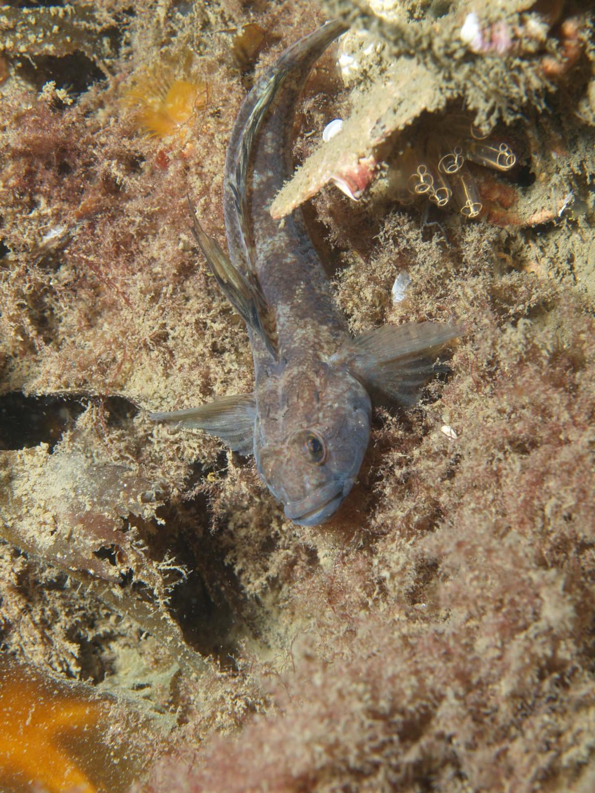 Scuba Dive at Drawna Rocks (14)