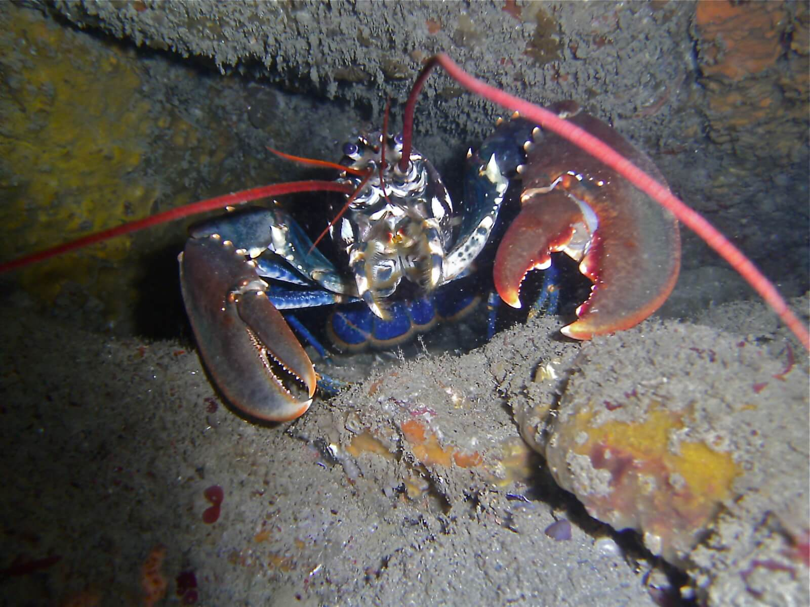 Scuba Dive at Drawna Rocks (18)