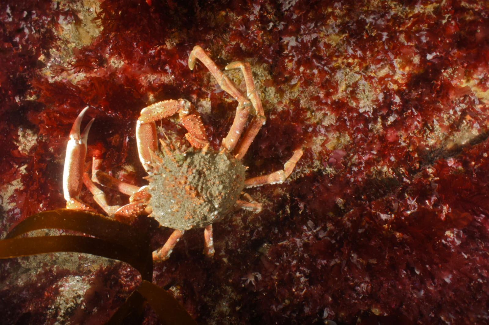 Scuba Dive at Drawna Rocks (3)