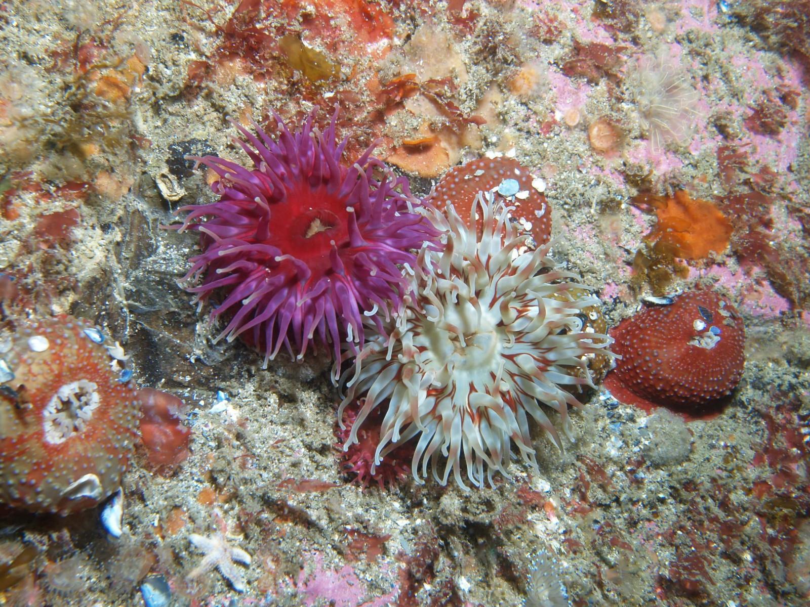 Scuba Dive at Drawna Rocks (4)