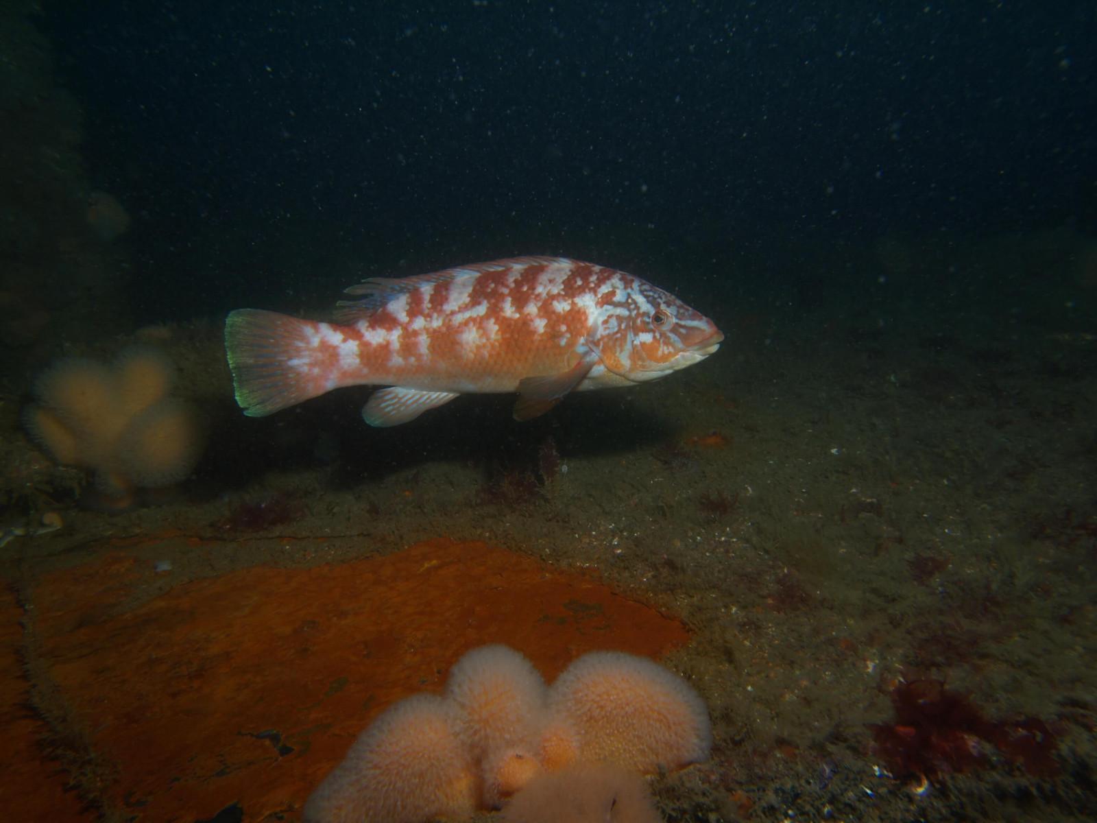 Scuba Dive at Drawna Rocks (5)