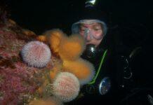 Scuba Dive at Drawna Rocks (9)