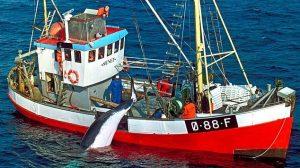 Norwegian Whale Vessel