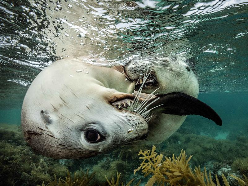DEEP Indonesia Underwater Photo Competition
