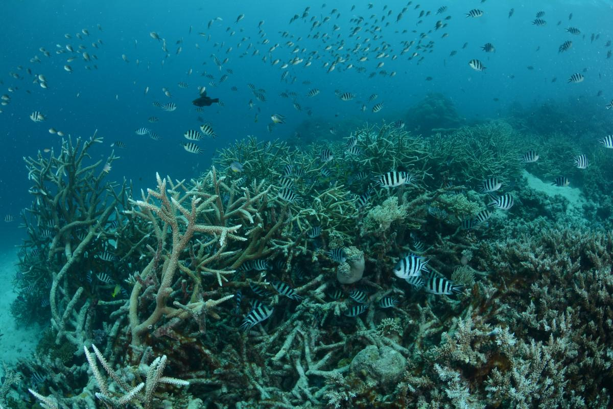 Great Barrier Reef Gets a $150 Million Boost