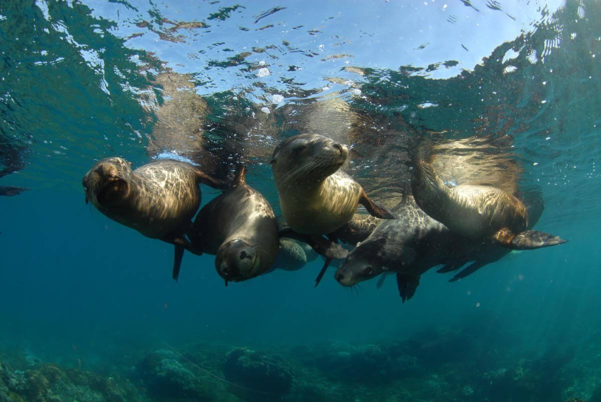 Sea lions at Los Islotes, Baja California