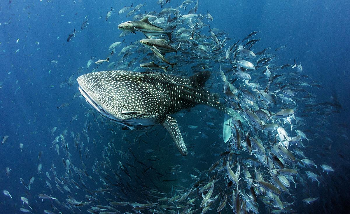 Seventh-Annual-UN-World-Oceans-Day-Photo-Competition-2020-CREDIT-Dan-Charity