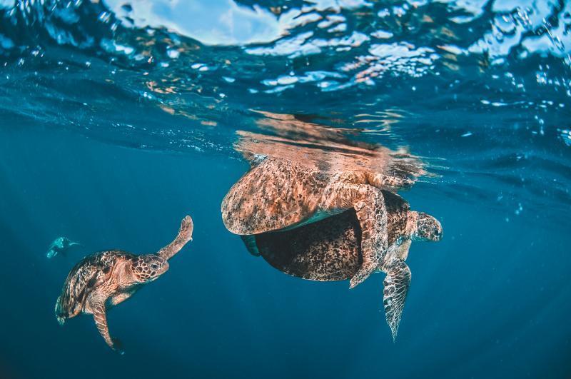 Surround yourself with turtles at sipadan island